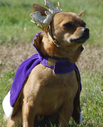 Putting On The Dog: Halloween fun not just for humans